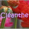 Cleanthe
